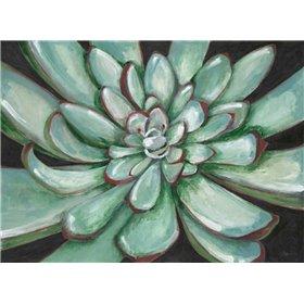 Desert Succulent