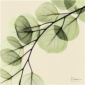 Mint Eucalyptus 1