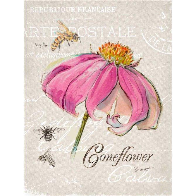Sketchbook Coneflower