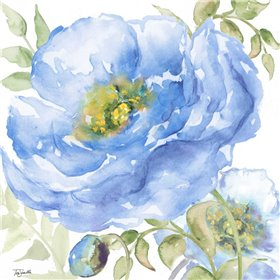 Sapphire Beauty II