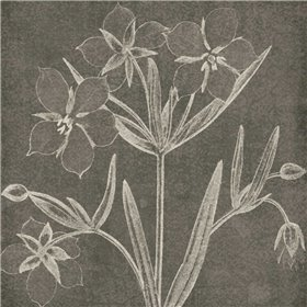 Botanical Beauty Chalk Square IV