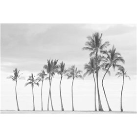 Paradise in Black and White