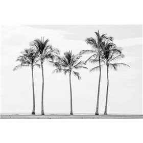 Paradise in Black and White II