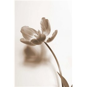 Delicate Floral I