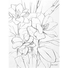 Floral Sketch I