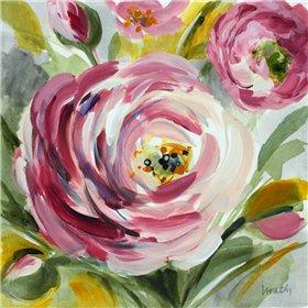 Ranunculus Rosa I