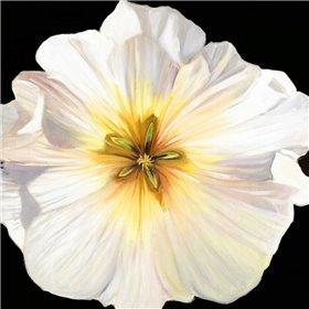 White Bloom I