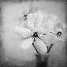 Blooms 1