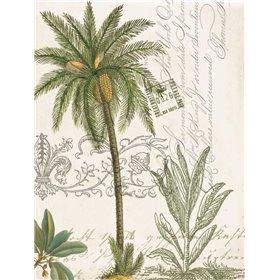 Palm Rectangle 1