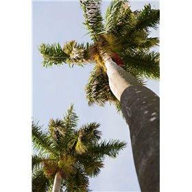 Below the Palms II