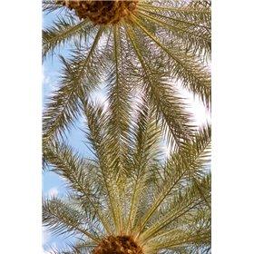 Below the Palms IV