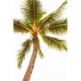 Below the Palms V