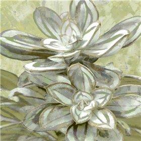 Succulent Verde IV