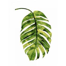 Palm II