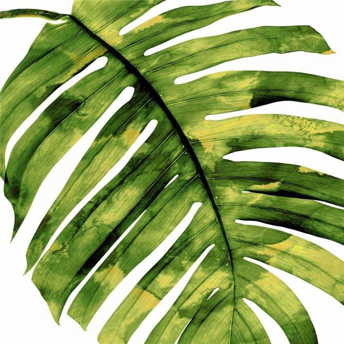 Tropical Palm II