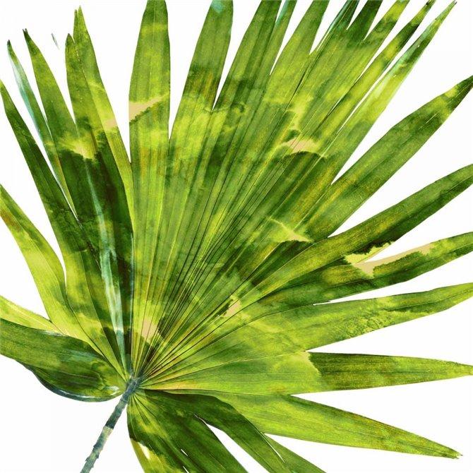 Tropical Palm IV