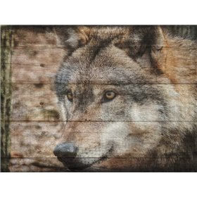 Alfa Wolf 2