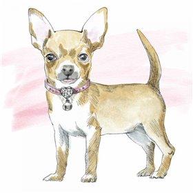 Glamour Pups VII