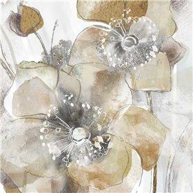 Taupe Spring Poppy
