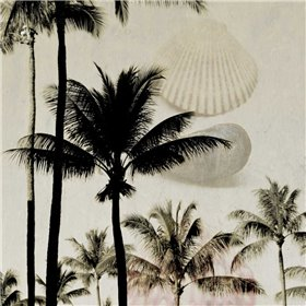 Shells In Paradise 3
