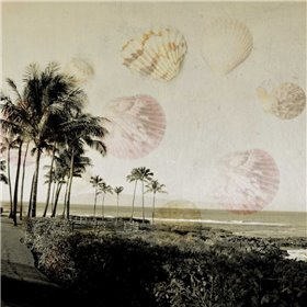 Shells In Paradise 1