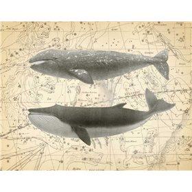 Whale Constellation 2