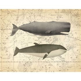 Whale Costellation 1