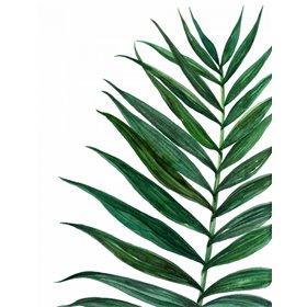 Tropical Breeze Palm 2
