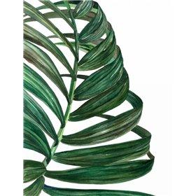 Tropical Breeze Palm 1