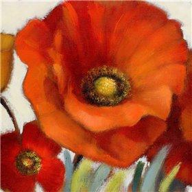 Poppy Splendor Square 1(Closeup)