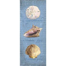 Oceanum Shell Panel Blue I