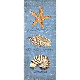 Oceanum Shell Panel Blue II