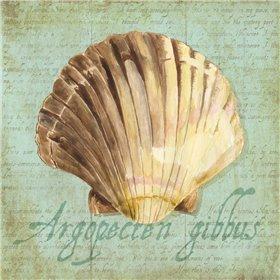 Oceanum Shells Green V