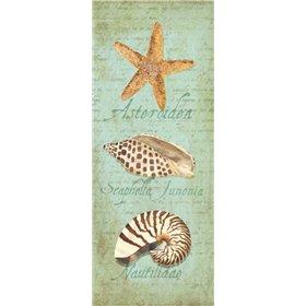 Oceanum Shell Panel Green II