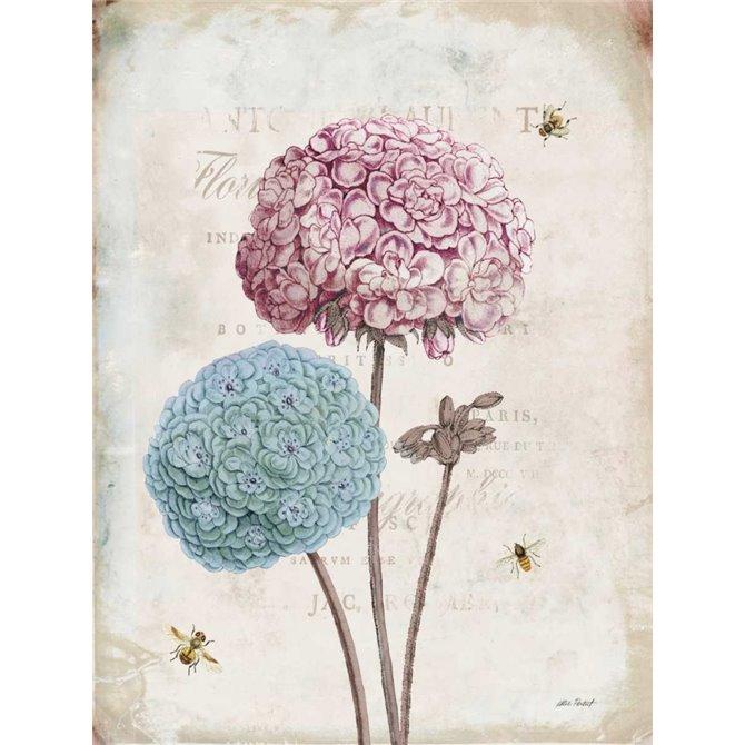 Geranium Study II Pink Flower
