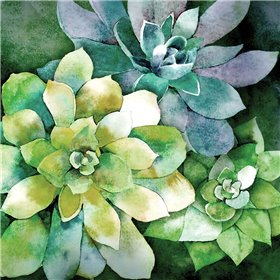 Summer Succulents