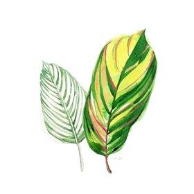 Tropical Striped Leaf