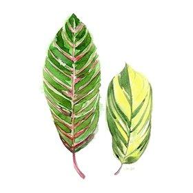 Tropical Variegated Leaf