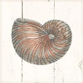 Shell Sketches III Shiplap