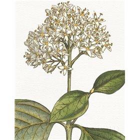 Botanique Bleu IV on White no Words