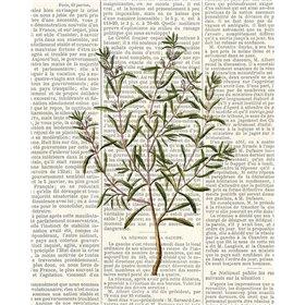 Fresh Herbs 2