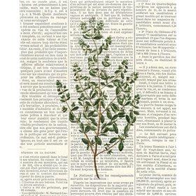 Fresh Herbs 3