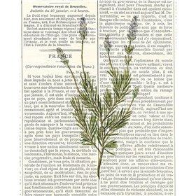 Fresh Herbs 4