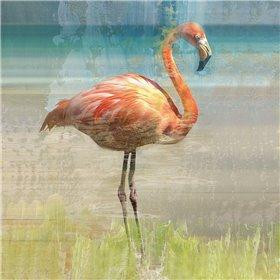 Flamingo Fancy I