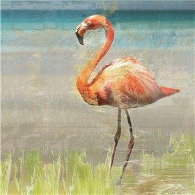 Flamingo Fancy II
