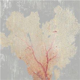 Blush Coral I