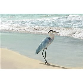 Beach Set Heron