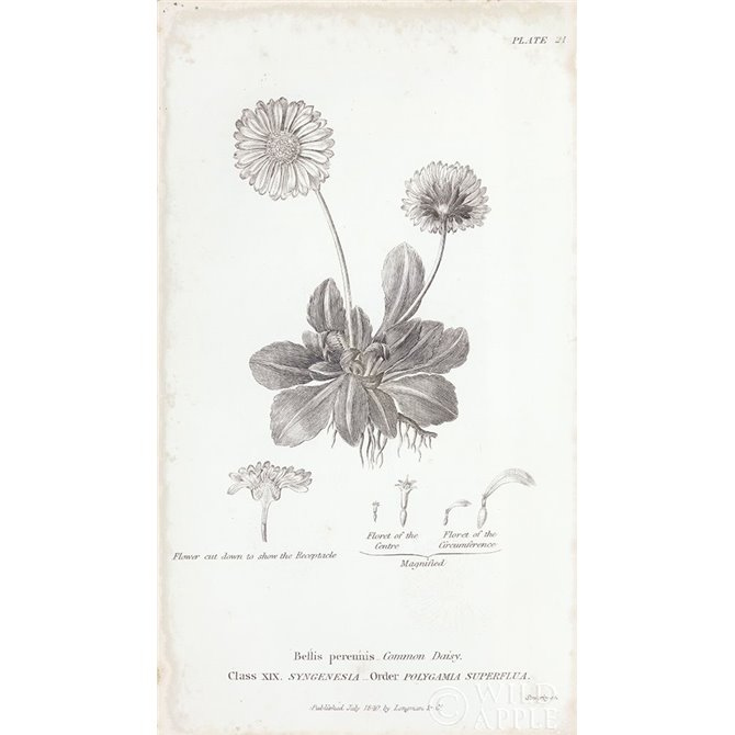Conversations on Botany IX