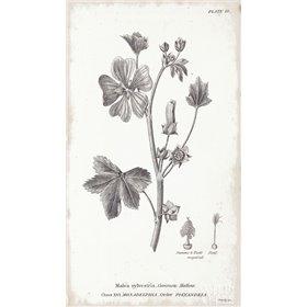 Conversations on Botany VII