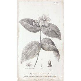Conversations on Botany VIII